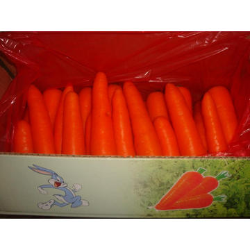 Sizes150-200g Fresh Carrot In Carton